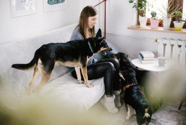 Mavelo-Dogs-TiAmoFoto (18)