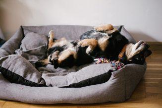 Mavelo-Dogs-TiAmoFoto (3)