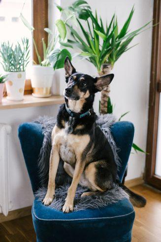 Mavelo-Dogs-TiAmoFoto (31)