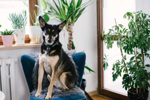 Mavelo-Dogs-TiAmoFoto (32)