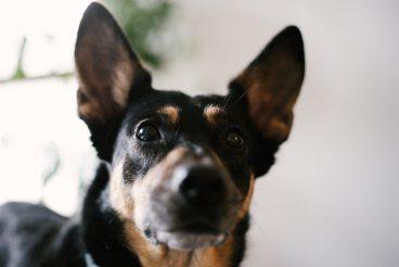 Mavelo-Dogs-TiAmoFoto (4)