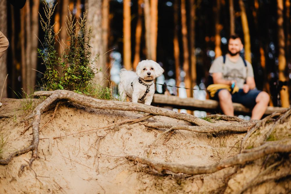 JT sesja narzeczenska las jezioro pies maltanczyk Poznan TiAmoFoto 30 - Joanna i Tomasz